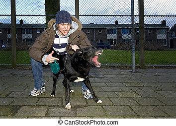 proprietário, vicioso, cão