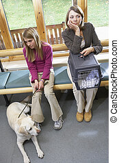 proprietários, sentando, veterinários, área recepção