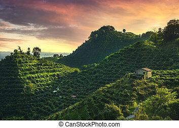 prosecco, italia, colinas, sitio., viñas, unesco, sunset., veneto