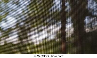 prospekt, od, drzewa, przez, bugscreen.