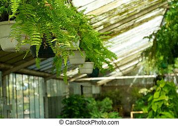 prospekt, od, szklarnia, rośliny, na, pokój dziecinny