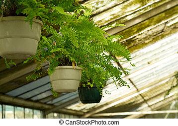 prospekt, od, szklarnia, rośliny