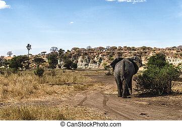 prospekt, tylny, słoń