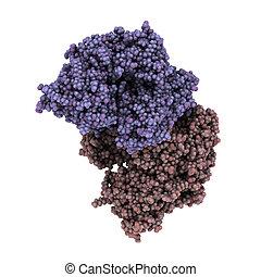 Prostate-specific membrane antigen (PSMA), chemical...