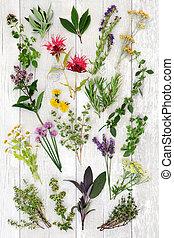 prostořeký bylina, abstraktní, grafické pozadí