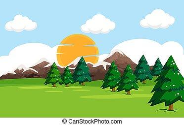 prosty, krajobraz, natura