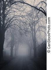prosty, otoczony, drzewa, przejście, ciemny, mglisty