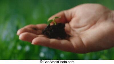 protéger, planter, nature, arbres, durabilité, soutenable