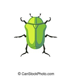 Protaetia May Bug Insect Design Flat - Protaetia may bug...