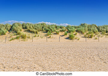 Protected landscape, dune on the beach of Holland