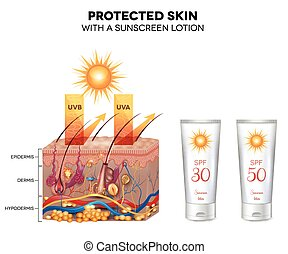 Protected skin with a sunscreen lotion, UVB and UVA rays can...