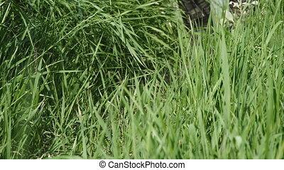 protecteur, couleur, bottes, kaki, promenades, épais, herbe, long, homme