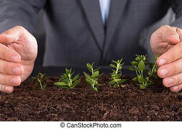 Protecting growing saplings - Businessman hands protecting...