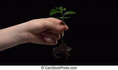 protection, alors, destruction, jets, racines, rare, il, ...