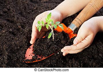 protegendo, criança, seedling, mãos