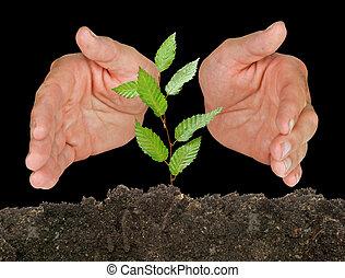 protegido, árbol, manos