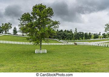 protegido, árvore, em, cavalo, paddock