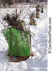 protegido, jovem, maçã, e, árvores cereja, em, inverno