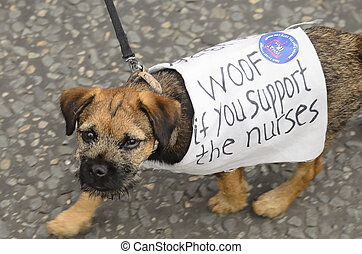 protest by dog, nurse pay rise