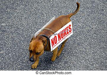 protestation, nuke, chien, non