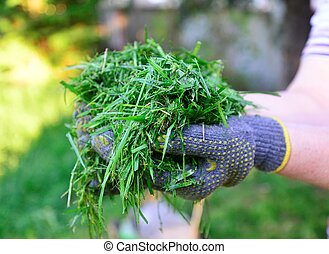 protettivo, womah, immagine, mosso, guanti, presa a terra, fresco, erba, mani