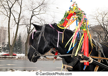 Proud black young horse