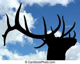 Proud Elk - Elk antlers silhouetted against clouds and blue...