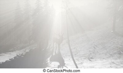 Proud Noble Deer Male in Winter Snow Forest - proud noble...