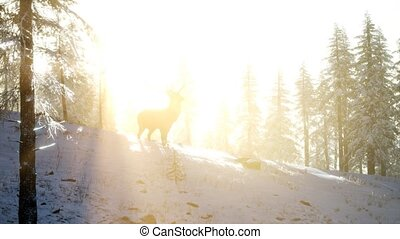 Proud Noble Deer Male in Winter Snow Forest - proud noble ...