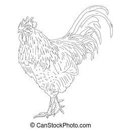 Proud Rooster - Retro Ad Art Illustration