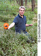 Man proud while picking blueberries in the forest