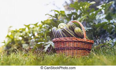 proutěný, cukina, koš, sklízet, courgettes, zahrada, -