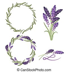 Provence lavender flower bouquet set. Violet lavender...