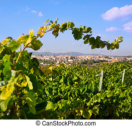 provincia, región, españa, valencia, requena, vino