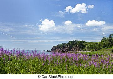 provincie, canada, beauty, kust, nieuwe brunswick