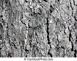 Beautiful pruche bark texture