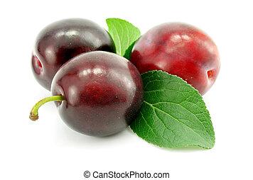 prune, vert, isolé, pousse feuilles, fruits