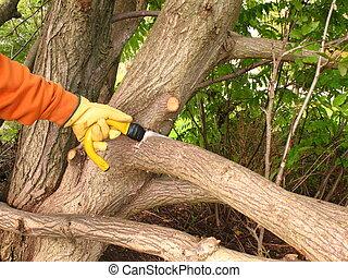 Pruning - Autumnal pruning