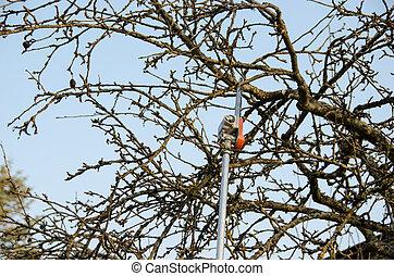 pruning fruit tree, seasonal garden spring work