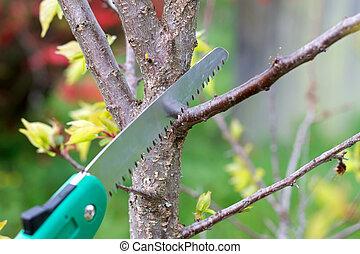 Pruning plants