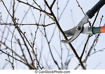 Pruning scissors - Spring cleaning in the garden using...