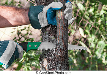 Pruning tree - Pruning fruit trees garden with a hacksaw