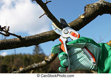 Pruning twigs and branches - Hand holding pruning shears, ...
