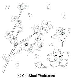Prunus persica Outline - Peach Flower Blossom. Vector Illustration.