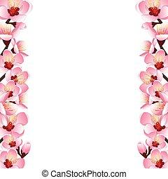 Prunus persica - Peach Flower Blossom Border isolated on...