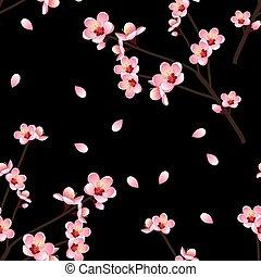 Prunus persica - Peach Flower Blossom on Black Background....