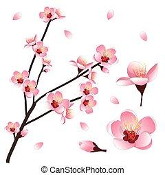 Prunus persica - Peach Flower Blossom. Vector Illustration....