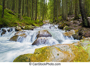 Prut river flowing through the coniferous forest on the hills of Carpathian Mountains, Hoverla National Park. Wild nature scene, fast water stream with waterfalls through the rocks.