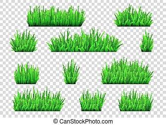 przeźroczysty, krzaki, odizolowany, zielona trawa, tło.
