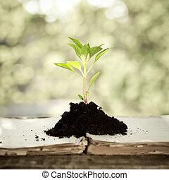 przeciw, roślina, kasownik, młody, tło